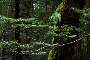 アスパイアリング国立公園の樹木の写真素材 [FYI03195244]