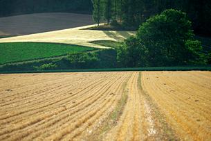 麦の刈り跡の写真素材 [FYI03195316]
