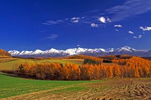 カラマツと大雪山連峰の写真素材 [FYI03195471]