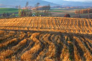 麦の刈り跡の写真素材 [FYI03195481]