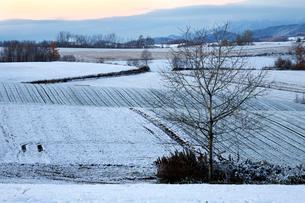 日の出前の丘の写真素材 [FYI03195486]