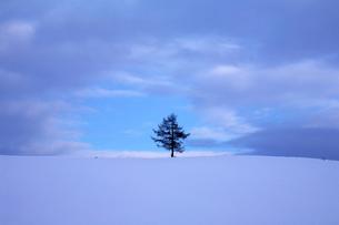 雲間とカラマツの写真素材 [FYI03195576]