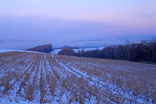雪の積もる日の出前の美瑛の写真素材 [FYI03195803]