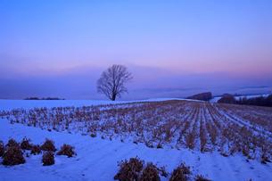 雪の積もる日の出前の美瑛の写真素材 [FYI03195812]