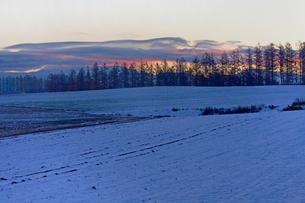 雪の積もる日の出前の美瑛の写真素材 [FYI03195813]