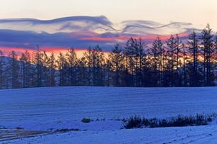 雪の積もる日の出前の美瑛の写真素材 [FYI03195815]