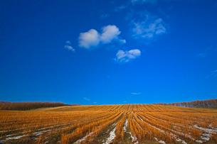 麦を刈ったあとの畑 美瑛の写真素材 [FYI03195828]