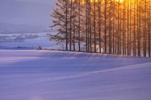 落葉松からの日の出の写真素材 [FYI03195891]
