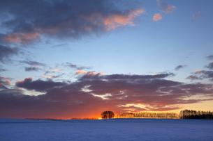 日の出前の雪原の写真素材 [FYI03196128]