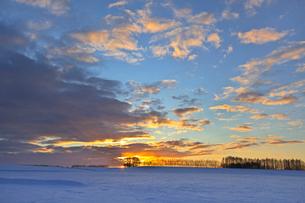 日の出前の雪原の写真素材 [FYI03196134]