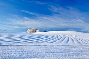 丘と雲 美瑛の写真素材 [FYI03196139]