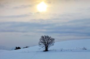 日の出と雪原 美瑛の写真素材 [FYI03196192]