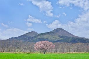 合格の桜の写真素材 [FYI03196305]