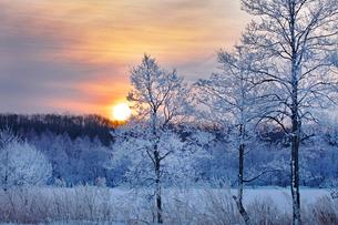 霧氷と日の出の写真素材 [FYI03196388]