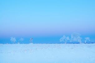 日の出前の霧氷並木の写真素材 [FYI03196630]