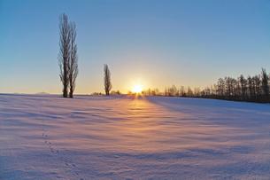 日の出とポプラ並木の写真素材 [FYI03196965]
