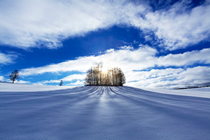 樹影の写真素材 [FYI03196994]