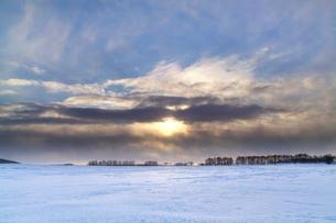 並木と日の出時の彩雲の写真素材 [FYI03197030]