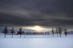夕陽の雪原と松並木の写真素材 [FYI03197041]