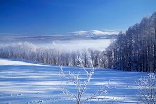 凍てついた朝の写真素材 [FYI03197051]