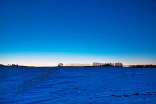 日の出前の並木の写真素材 [FYI03197054]