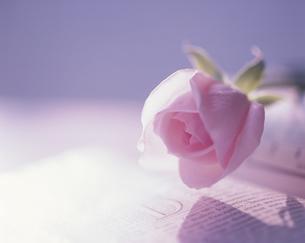 本に載せた1輪のピンク色のバラの写真素材 [FYI03197110]