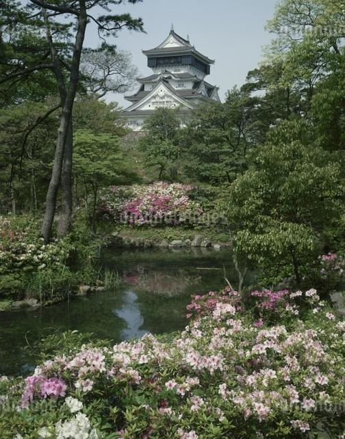 小倉城下の万葉の園のつつじ 北九州 福岡県の写真素材 [FYI03197476]