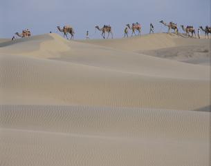 ラクダの群れと人物 ジャイサイメール インドの写真素材 [FYI03198083]