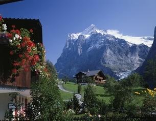 民家とウェッターホルン  グリンデルワルト スイスの写真素材 [FYI03198270]