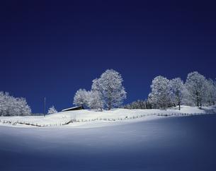 樹林 グリンデルワルド スイスの写真素材 [FYI03198330]