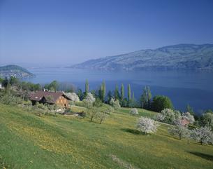 春のトゥーン湖 シュピーツ スイスの写真素材 [FYI03198408]