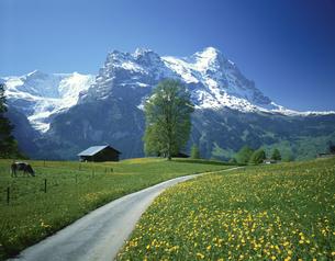 小道とアイガー   グリンデルワルト スイスの写真素材 [FYI03198409]