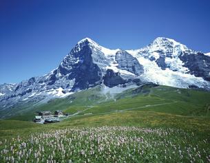 クライネシャイデックにてグリンデルワルド スイスの写真素材 [FYI03198432]