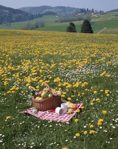 花畑とレジャーマットとバスケットの写真素材 [FYI03198444]