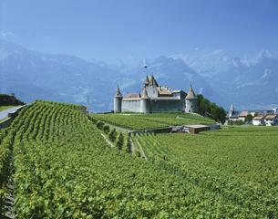 葡萄畑とアイクル城  スイスの写真素材 [FYI03198472]