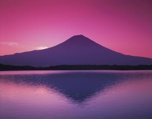富士山と田貫湖とピンクの空 静岡県の写真素材 [FYI03198591]