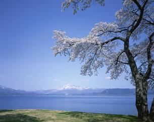 桜と田沢湖と駒ヶ岳  秋田県の写真素材 [FYI03198642]