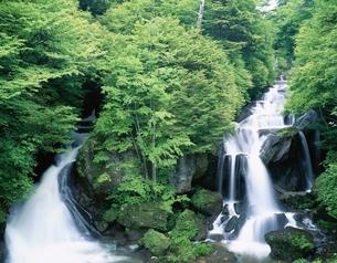 日光の竜頭の滝    栃木県の写真素材 [FYI03198682]