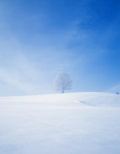 冬の一本の木の写真素材 [FYI03199056]