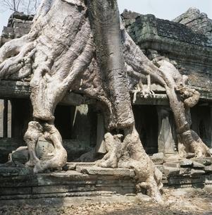 プリアカーンと巨木 カンボジアの写真素材 [FYI03199735]