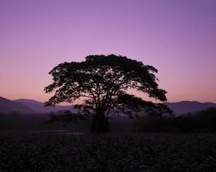 裏磐梯高原の黎明と樹木  福島県の写真素材 [FYI03199931]