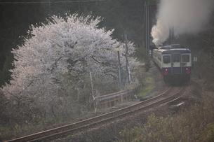 丸い桜とSL磐越物語号の写真素材 [FYI03200063]