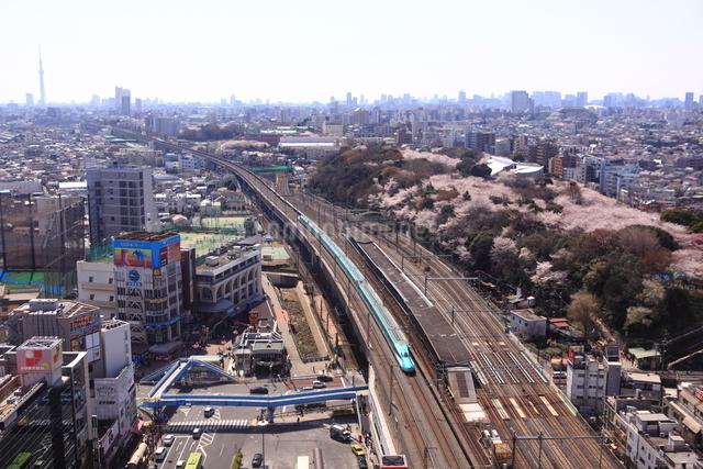 春の東北新幹線はやぶさの写真素材 [FYI03200123]