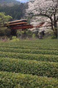 寒桜と茶畑とローカル電車の写真素材 [FYI03200128]