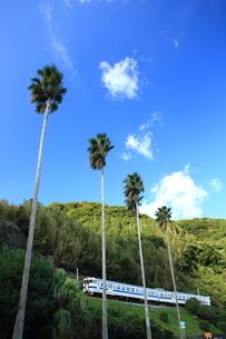 シュロの木と指宿枕崎線の写真素材 [FYI03200146]