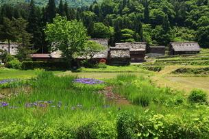菅沼合掌集落と水生植物の写真素材 [FYI03200223]