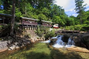 ヒノキ林と赤沢森林鉄道と赤沢渓谷の写真素材 [FYI03200291]