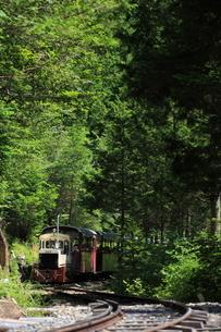ヒノキ林と赤沢森林鉄道の写真素材 [FYI03200293]
