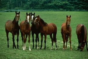 馬の写真素材 [FYI03201125]