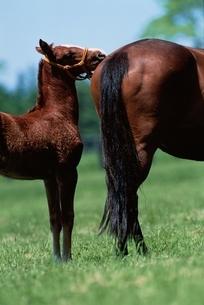 馬の写真素材 [FYI03201146]